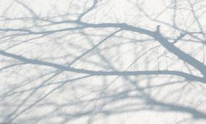 桜影20170304 ブログ用