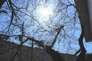 桜1ブログ