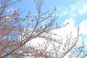 桜2ブログ